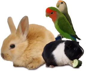 動物イメージ1